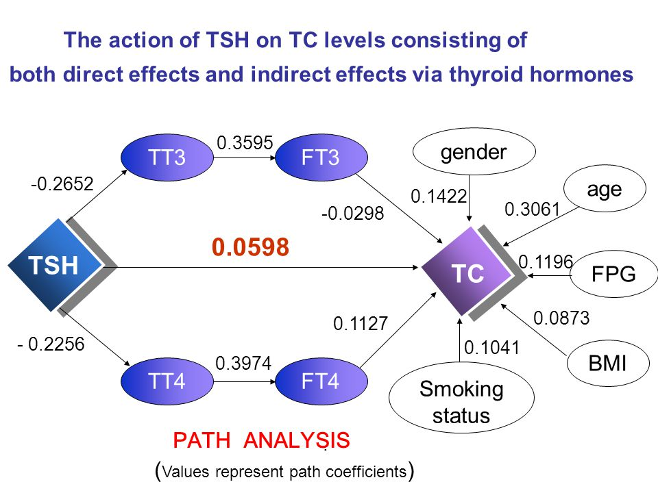 0.0598 TSH TC The action of TSH on TC levels consisting of