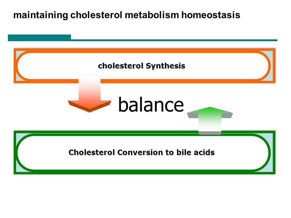 balance maintaining cholesterol metabolism homeostasis
