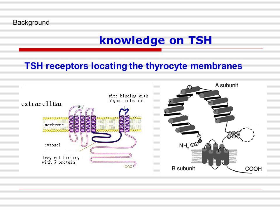 TSH receptors locating the thyrocyte membranes