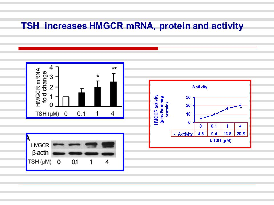 TSH increases HMGCR mRNA, protein and activity