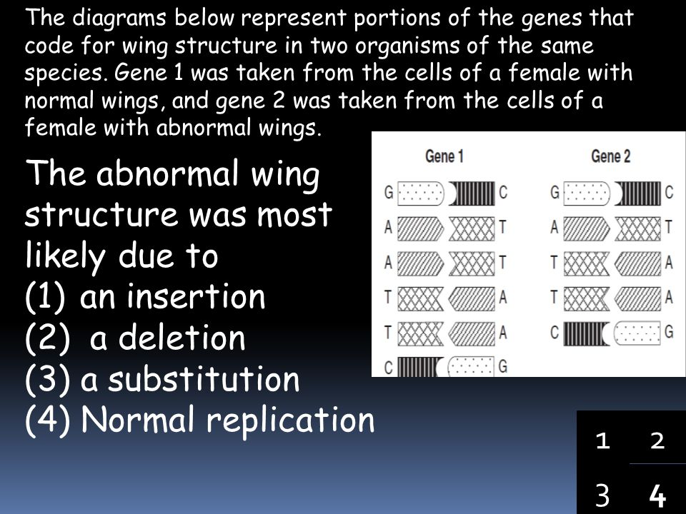 The abnormal wing structure was most likely due to