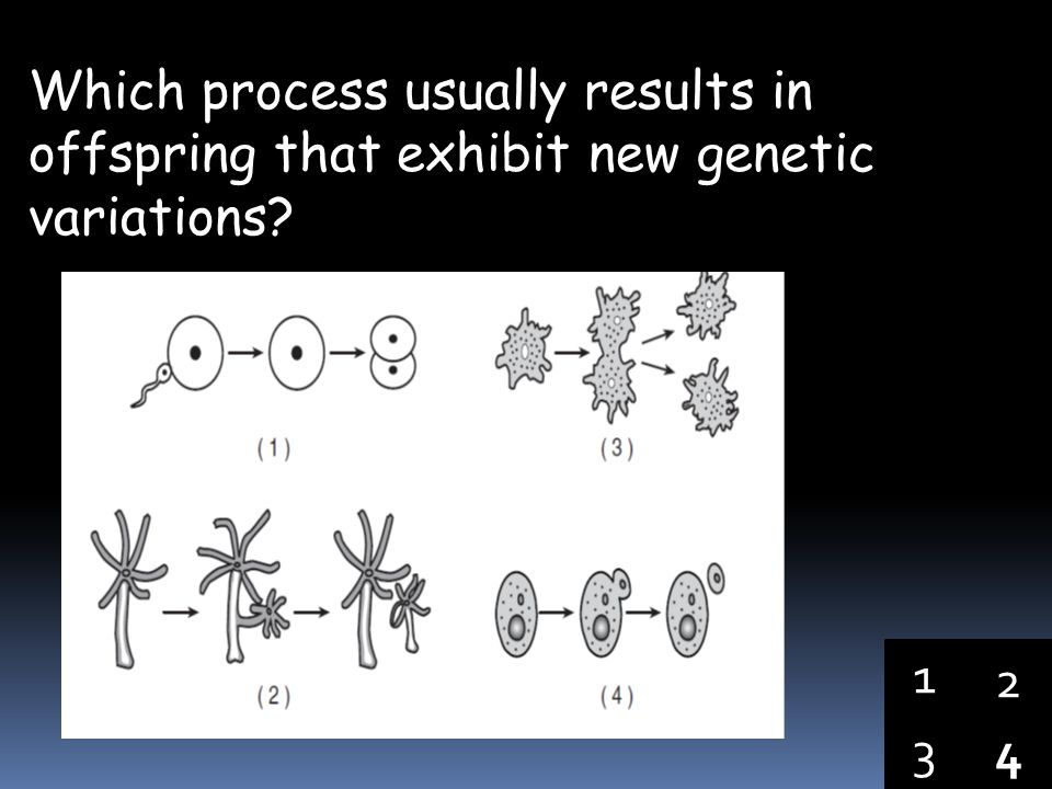 Which process usually results in offspring that exhibit new genetic variations
