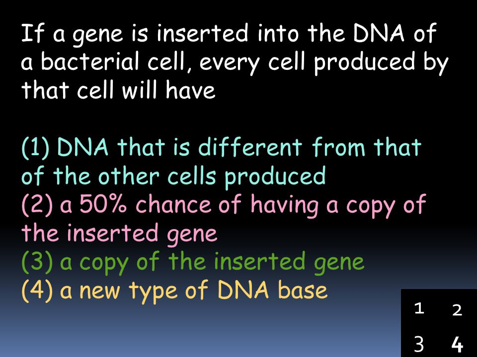If a gene is inserted into the DNA of a bacterial cell, every cell produced by that cell will have