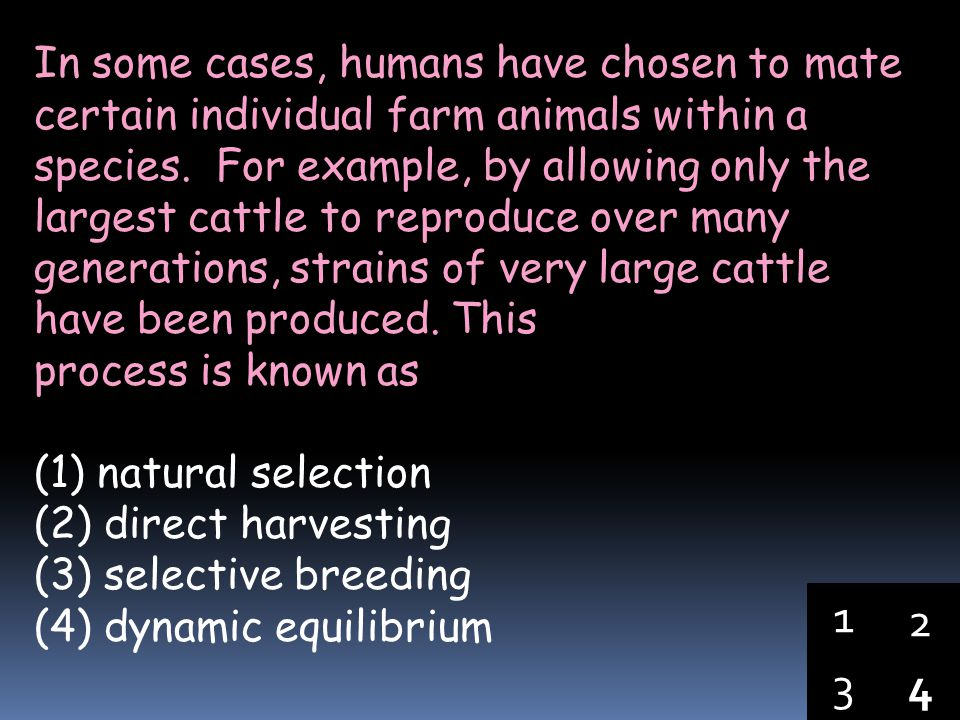 In some cases, humans have chosen to mate certain individual farm animals within a species. For example, by allowing only the largest cattle to reproduce over many generations, strains of very large cattle have been produced. This