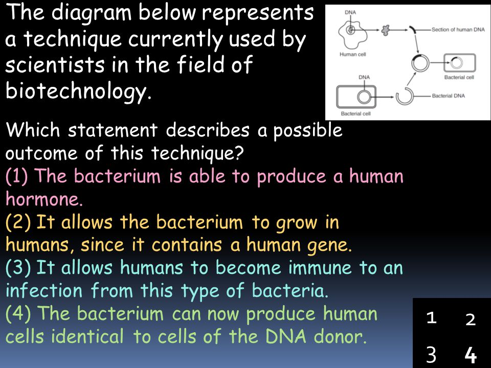 The diagram below represents a technique currently used by scientists in the field of biotechnology.
