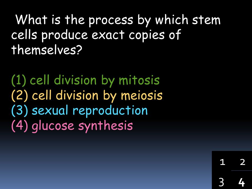 What is the process by which stem cells produce exact copies of themselves