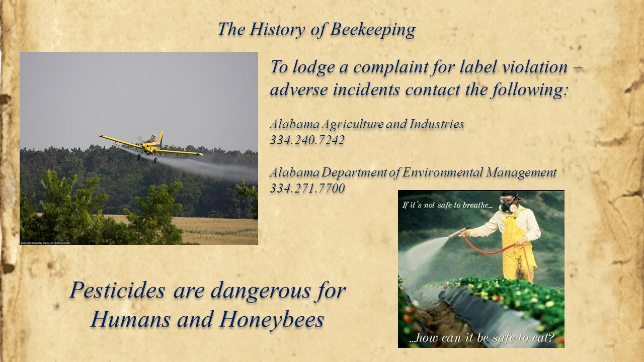 Pesticides are dangerous for Humans and Honeybees