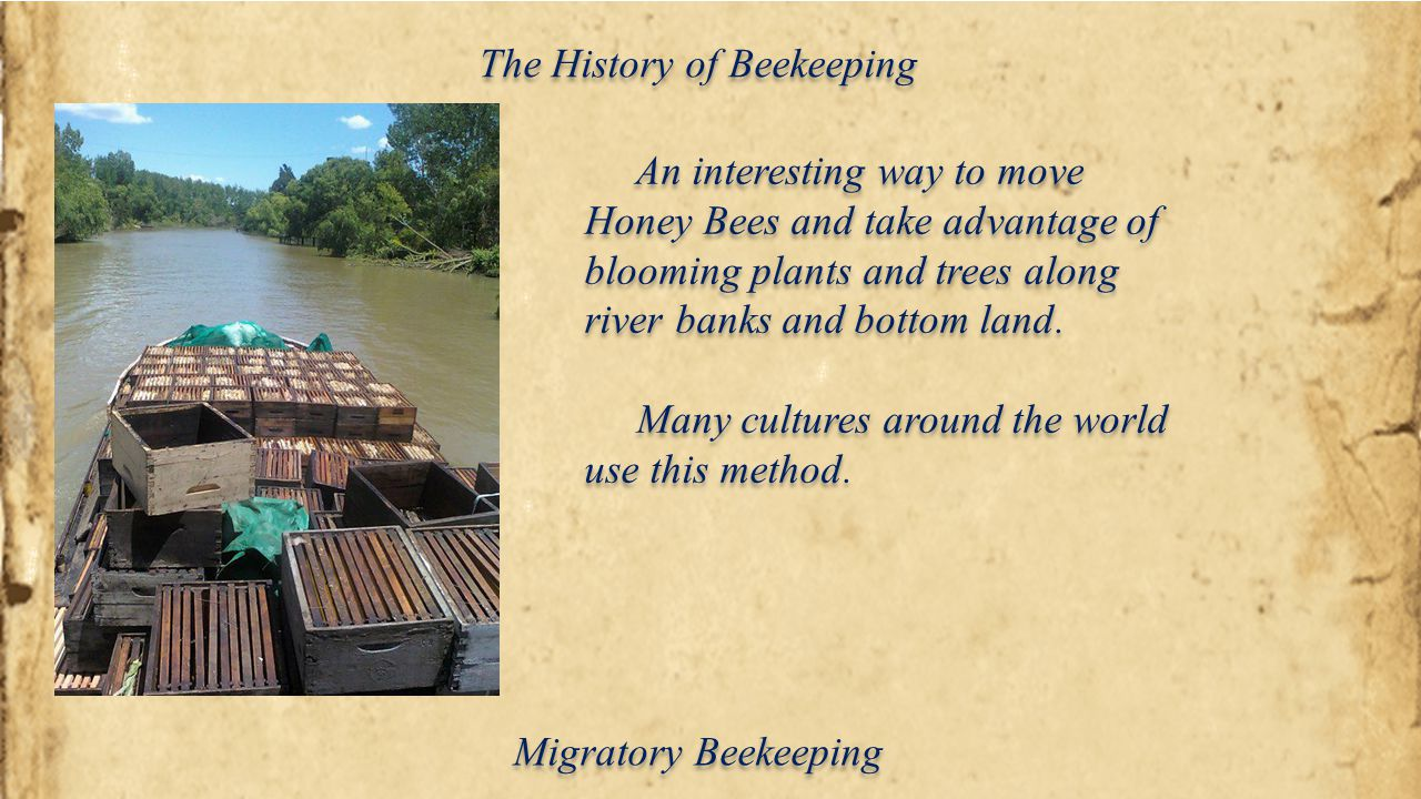 The History of Beekeeping