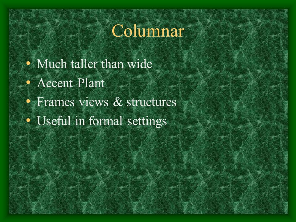 Columnar Much taller than wide Accent Plant Frames views & structures