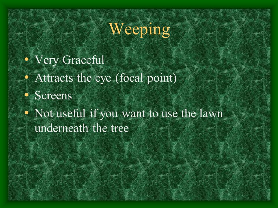 Weeping Very Graceful Attracts the eye (focal point) Screens