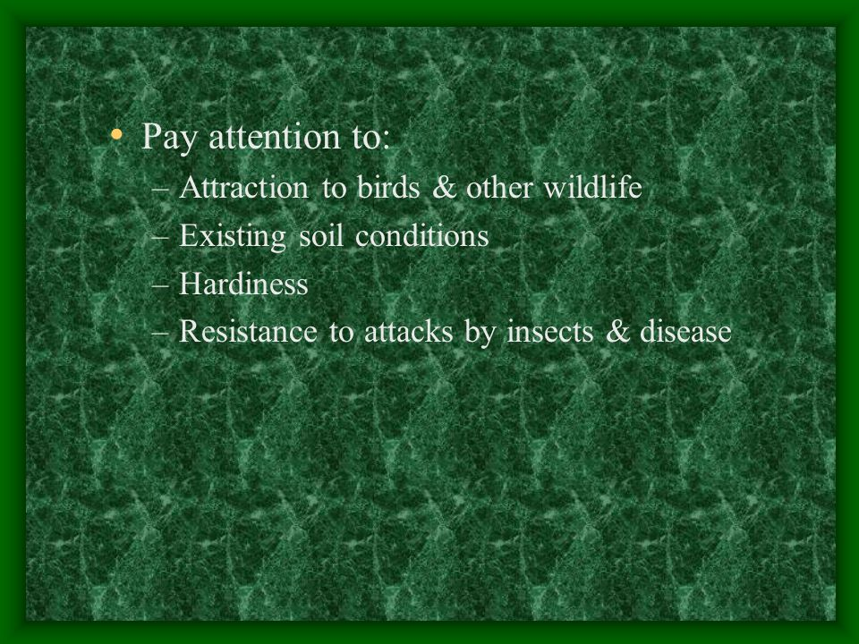 Pay attention to: Attraction to birds & other wildlife