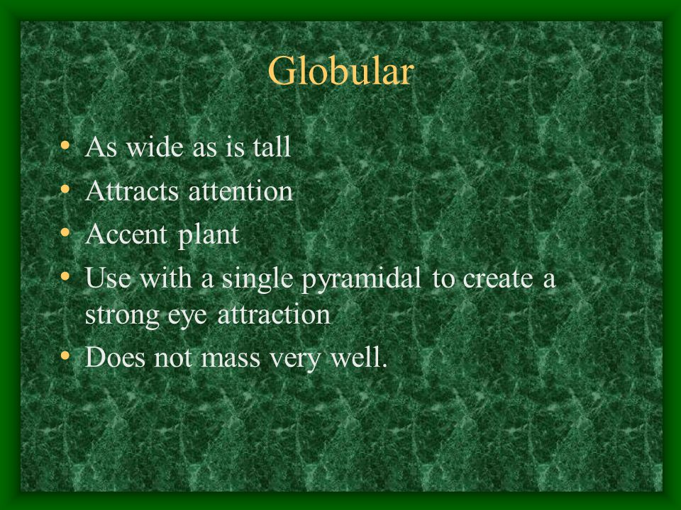 Globular As wide as is tall Attracts attention Accent plant