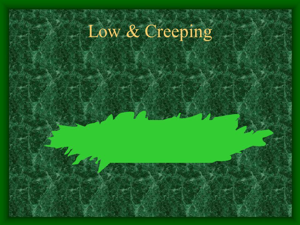 Low & Creeping