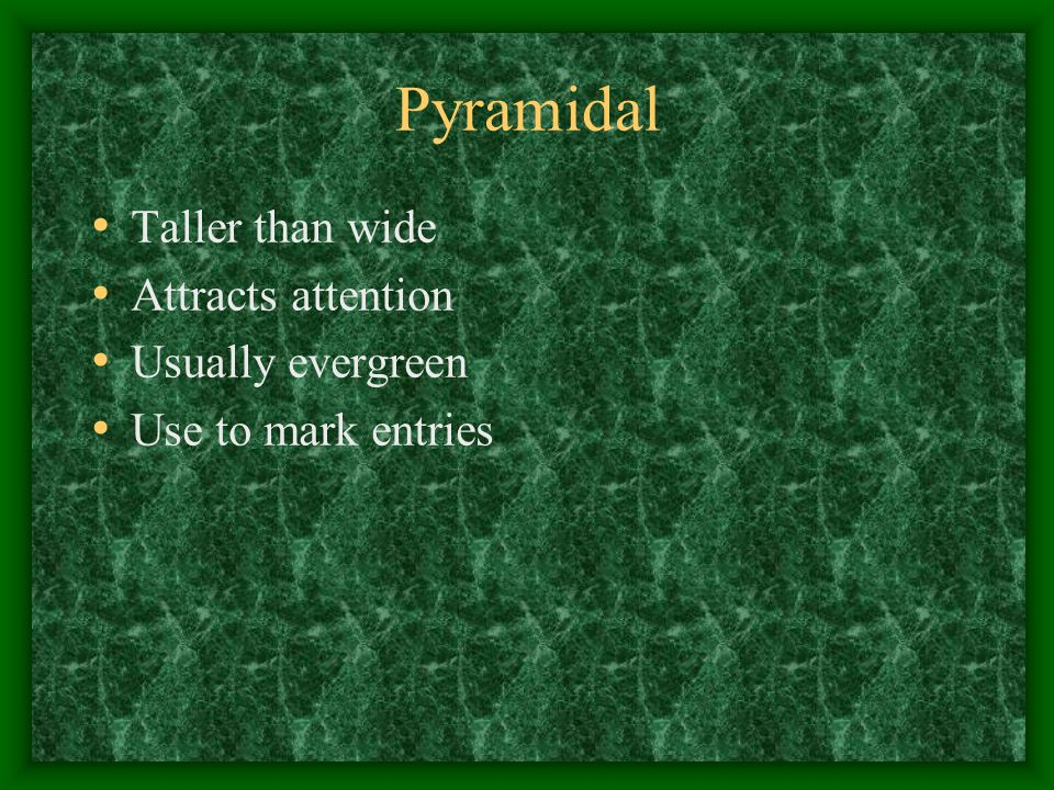 Pyramidal Taller than wide Attracts attention Usually evergreen