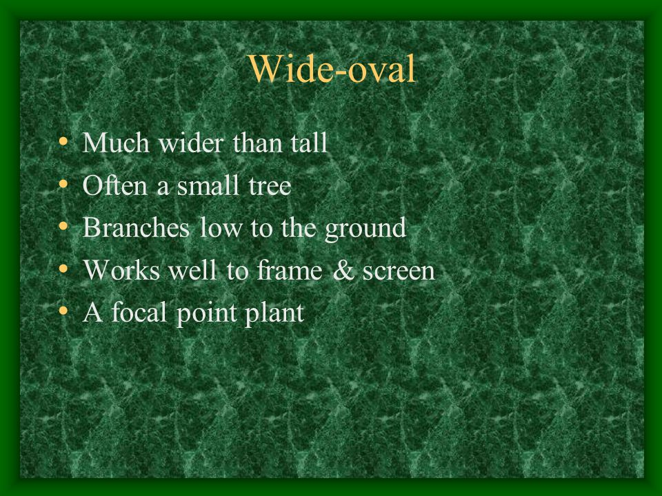Wide-oval Much wider than tall Often a small tree