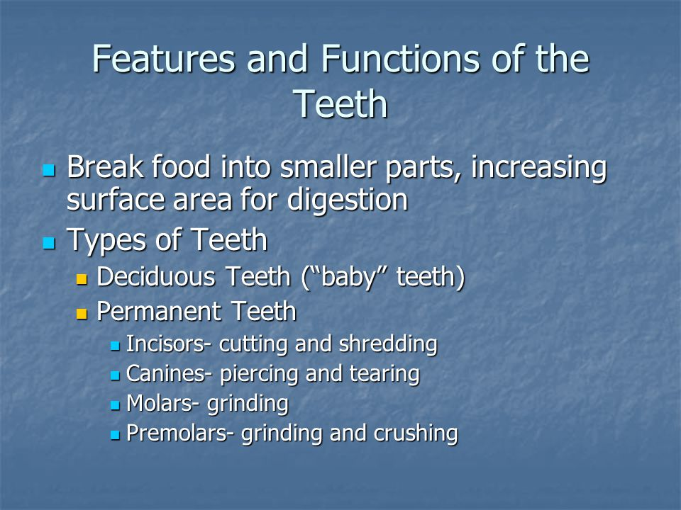Features and Functions of the Teeth