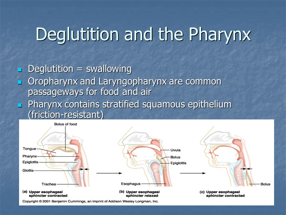 Deglutition and the Pharynx
