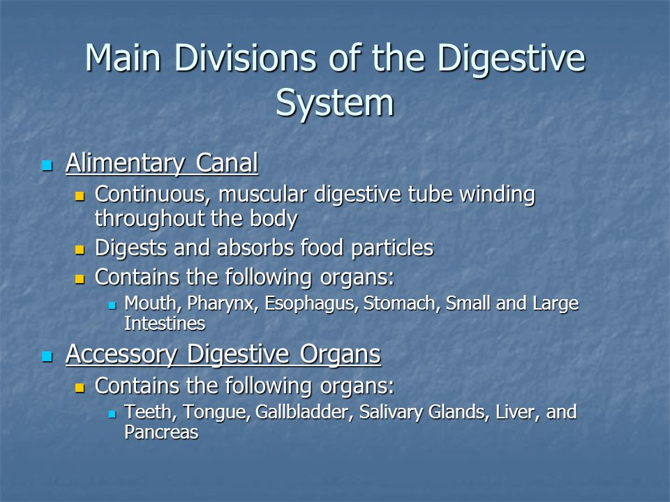 Main Divisions of the Digestive System