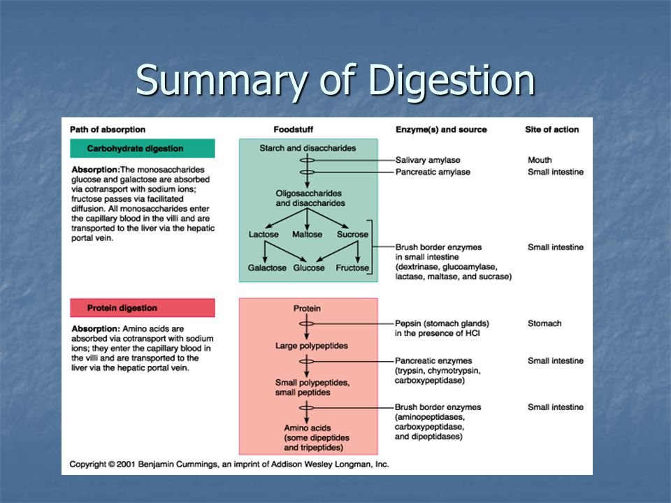 Summary of Digestion