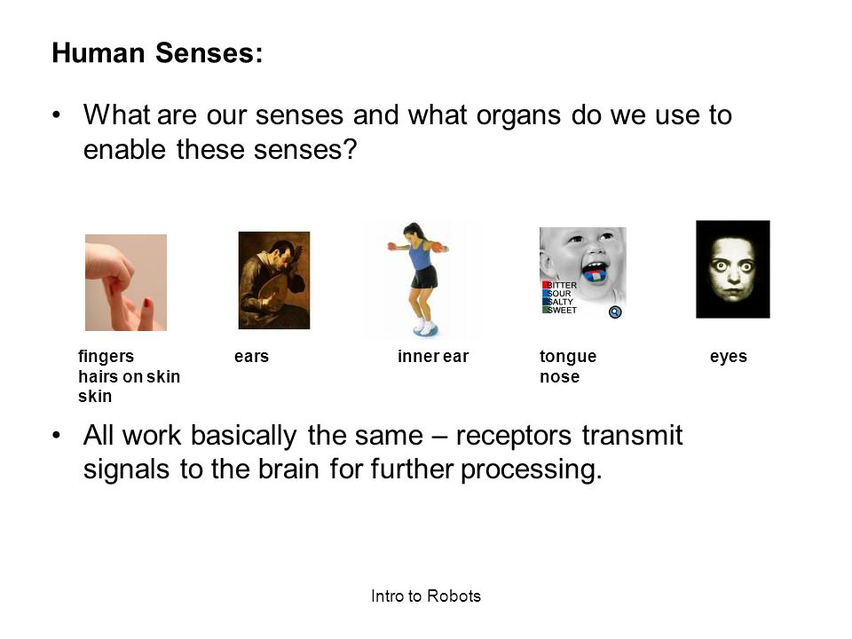 What are our senses and what organs do we use to enable these senses