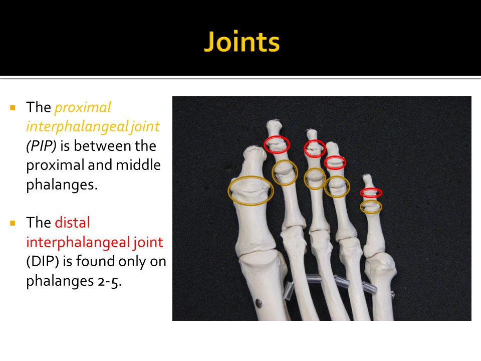 Joints The proximal interphalangeal joint (PIP) is between the proximal and middle phalanges.