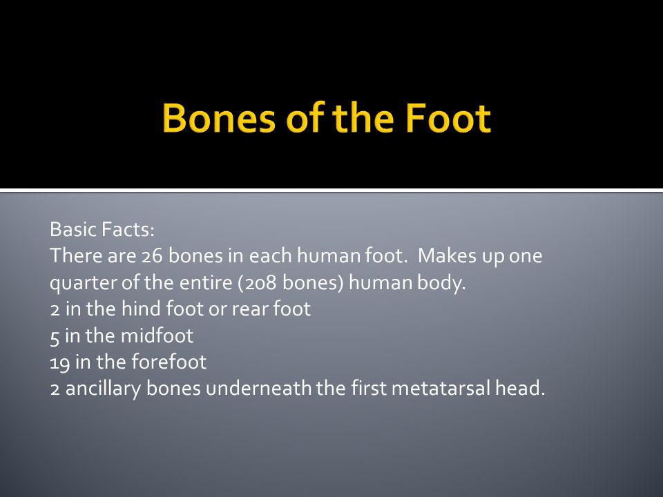 Bones of the Foot Basic Facts:
