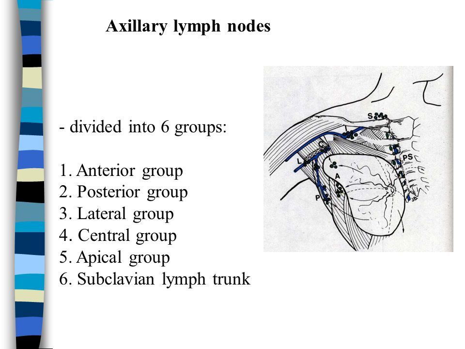 Axillary lymph nodes - divided into 6 groups: 1. Anterior group. 2. Posterior group. 3. Lateral group.