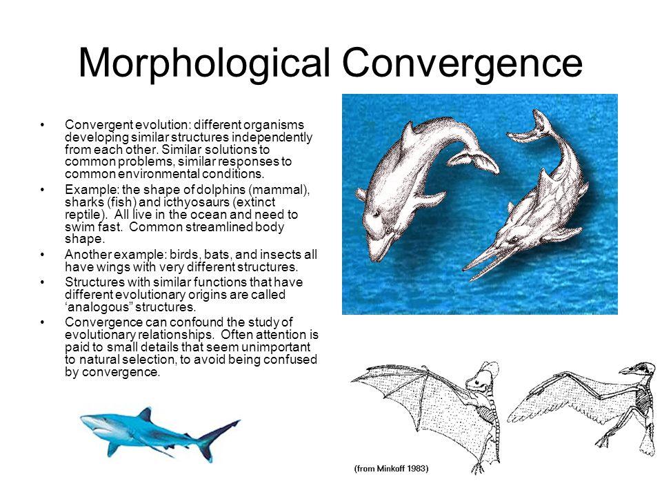 Morphological Convergence