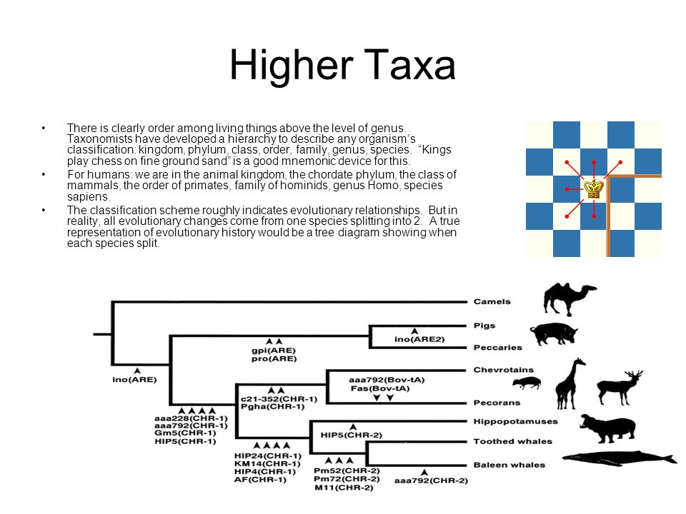Higher Taxa