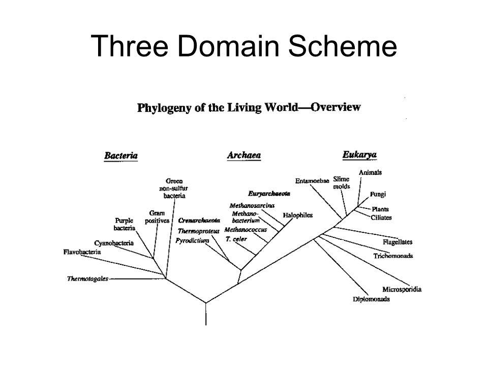 Three Domain Scheme