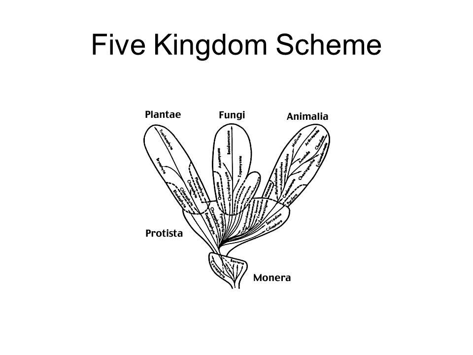 Five Kingdom Scheme
