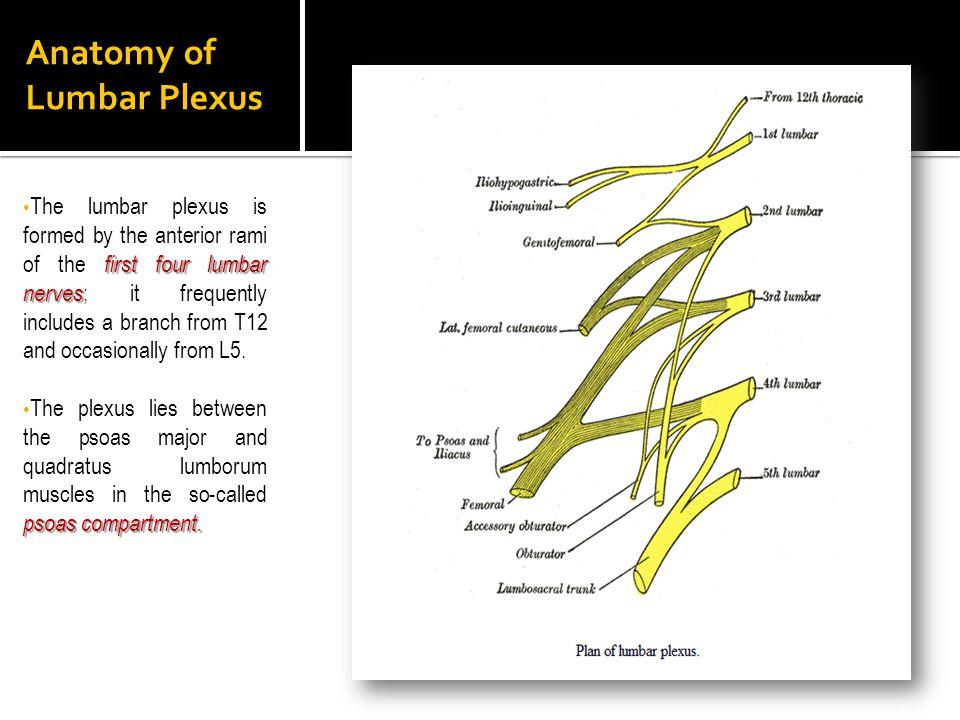 Anatomy of Lumbar Plexus