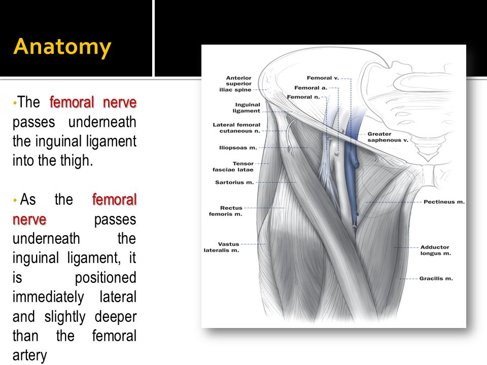 Anatomy The femoral nerve passes underneath the inguinal ligament into the thigh.