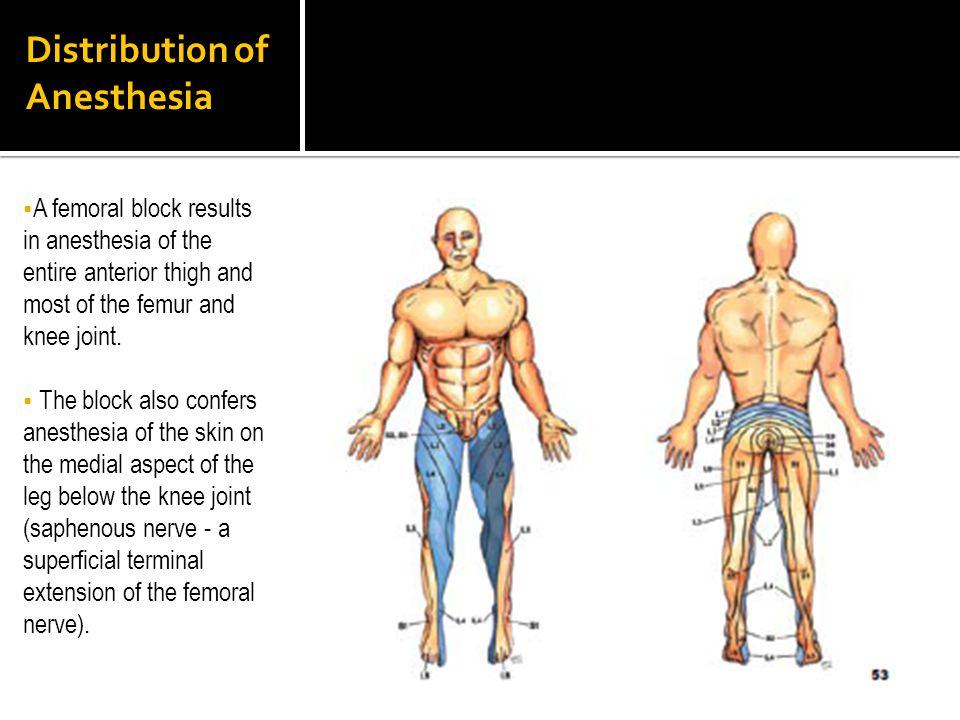 Distribution of Anesthesia