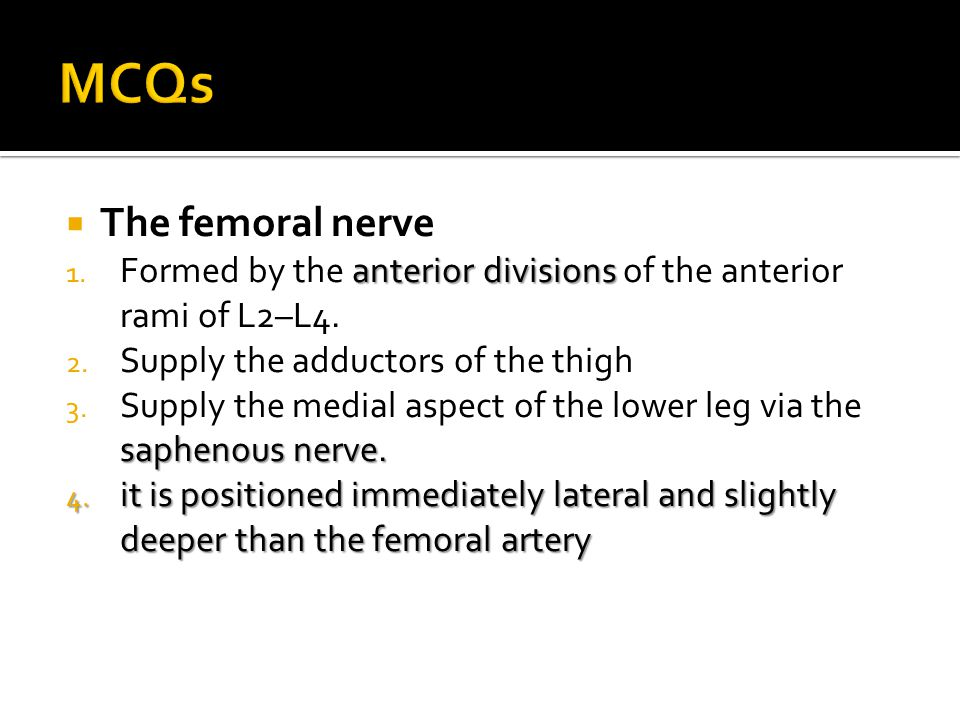 MCQs The femoral nerve. Formed by the anterior divisions of the anterior rami of L2–L4. Supply the adductors of the thigh.