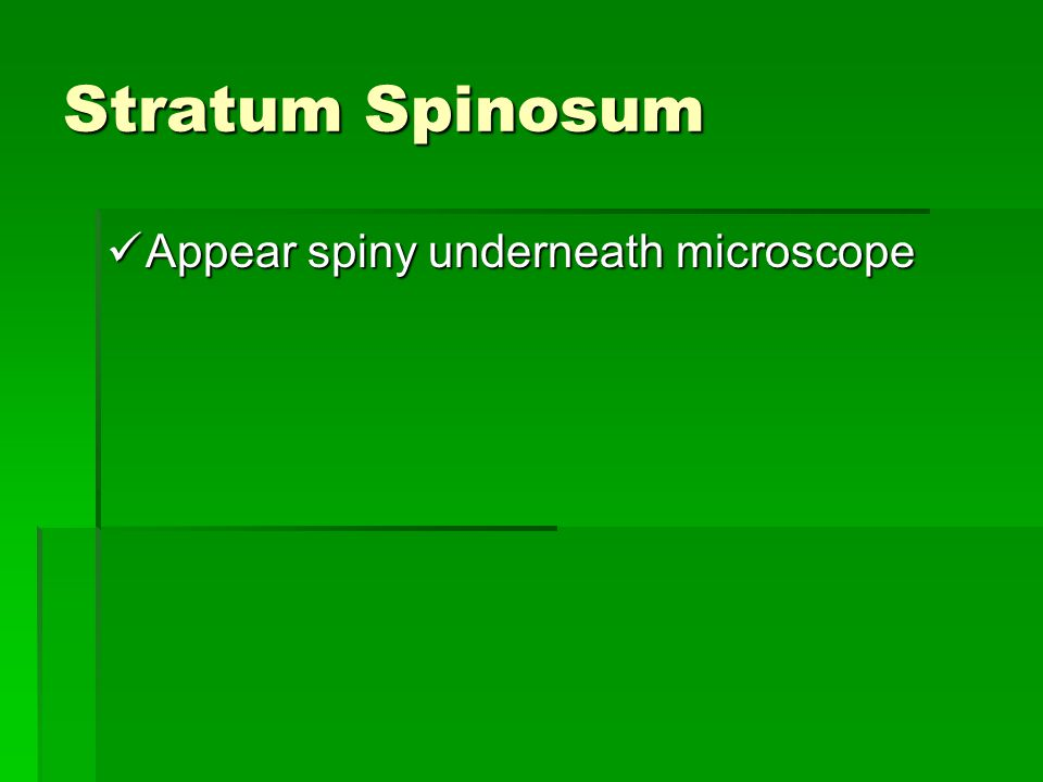 Stratum Spinosum Appear spiny underneath microscope