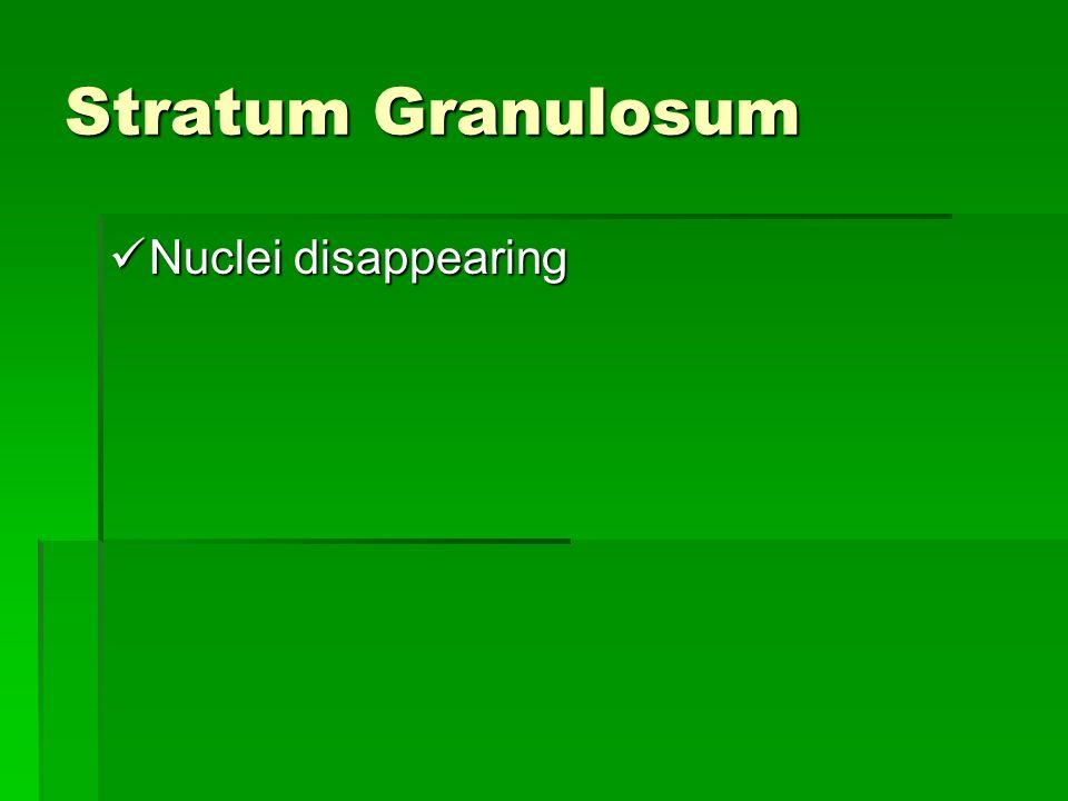 Stratum Granulosum Nuclei disappearing
