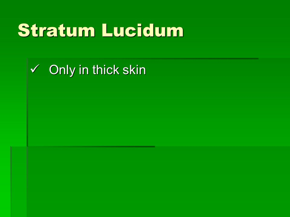 Stratum Lucidum Only in thick skin