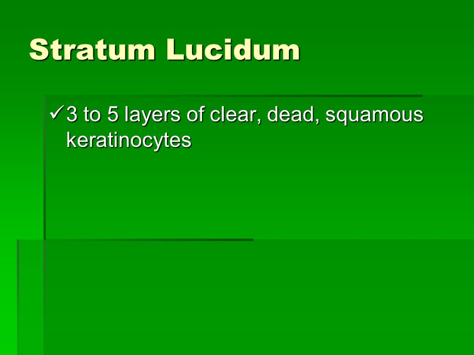 Stratum Lucidum 3 to 5 layers of clear, dead, squamous keratinocytes
