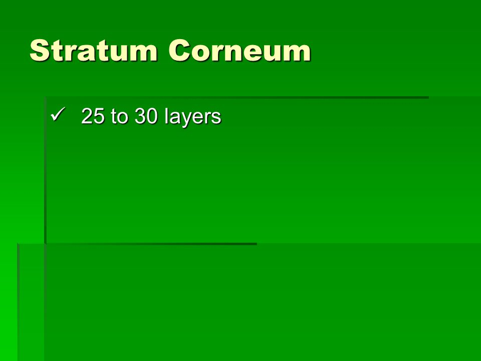 Stratum Corneum 25 to 30 layers