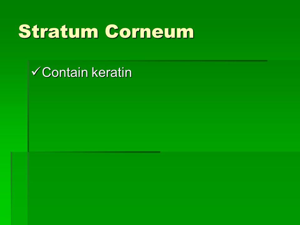 Stratum Corneum Contain keratin