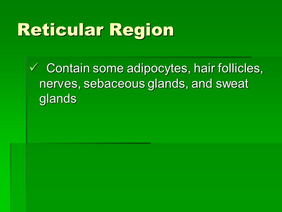 Reticular Region Contain some adipocytes, hair follicles, nerves, sebaceous glands, and sweat glands.