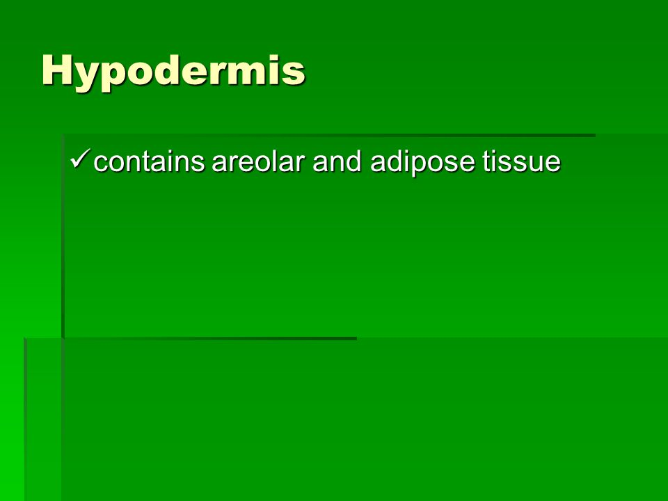 Hypodermis contains areolar and adipose tissue