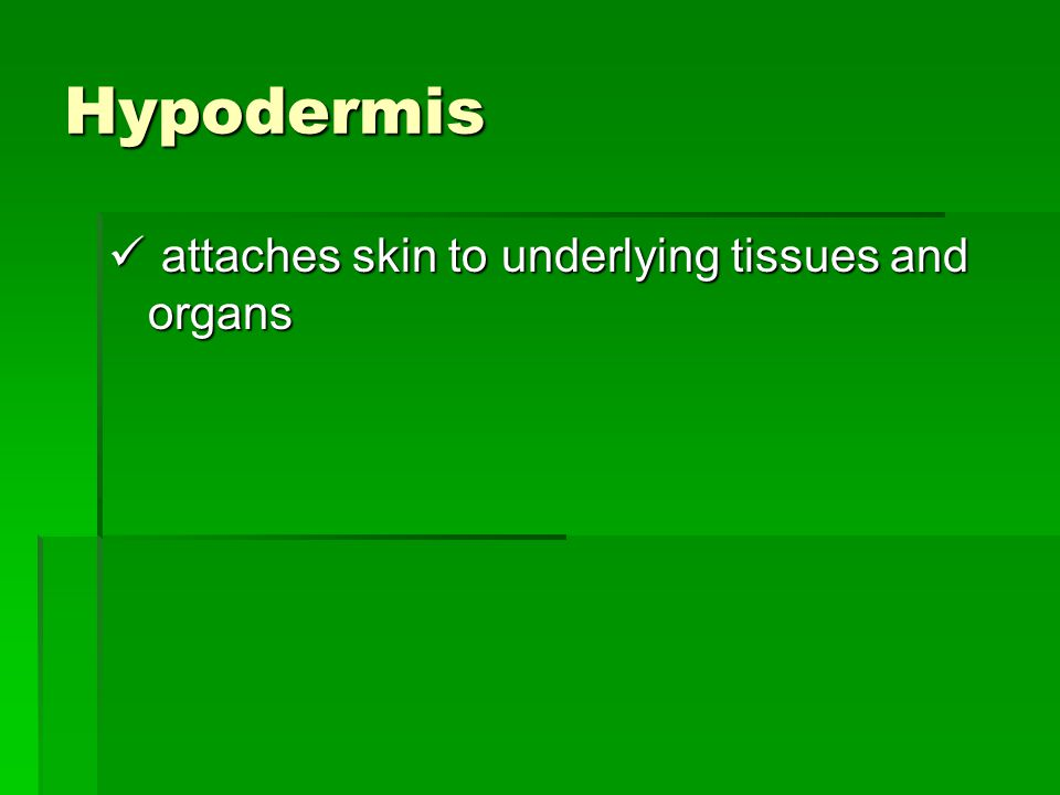 Hypodermis attaches skin to underlying tissues and organs