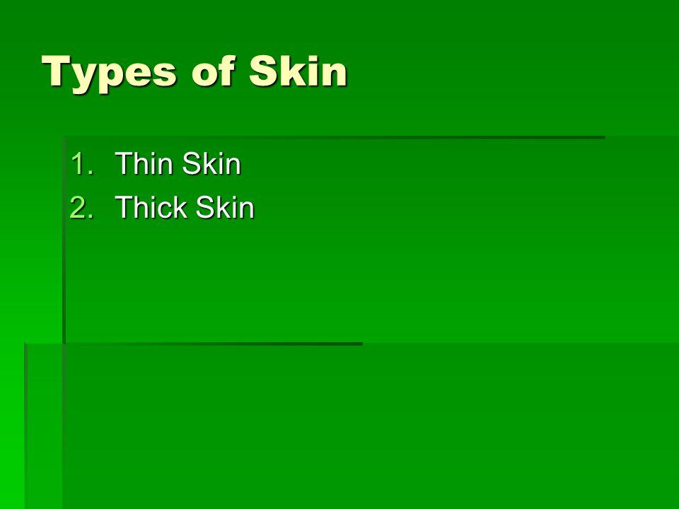 Types of Skin Thin Skin Thick Skin