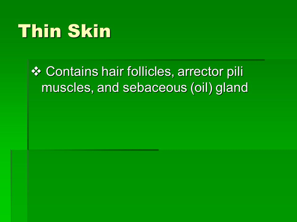 Thin Skin Contains hair follicles, arrector pili muscles, and sebaceous (oil) gland