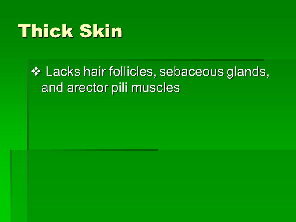 Thick Skin Lacks hair follicles, sebaceous glands, and arector pili muscles