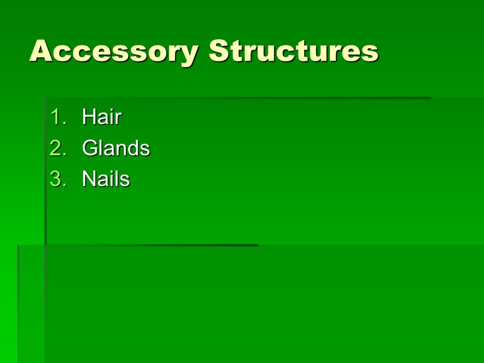 Accessory Structures Hair Glands Nails