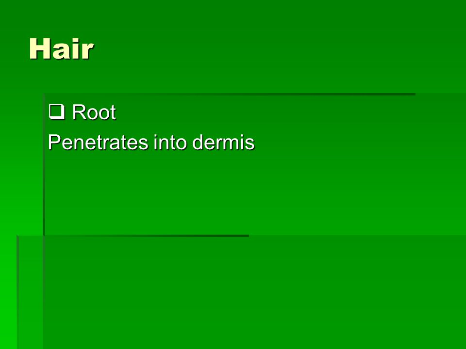 Hair Root Penetrates into dermis