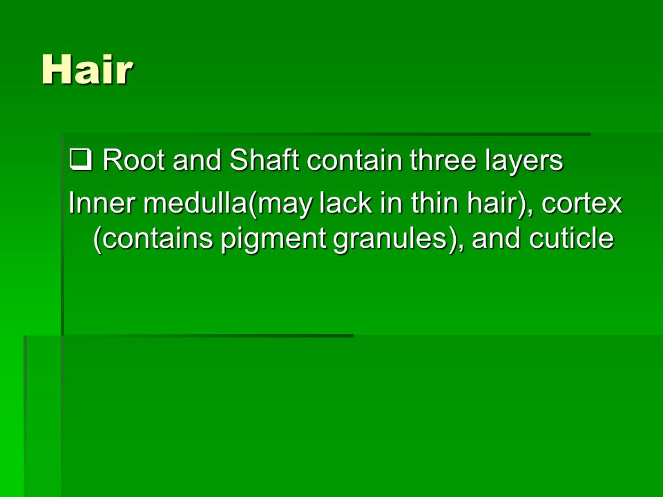 Hair Root and Shaft contain three layers